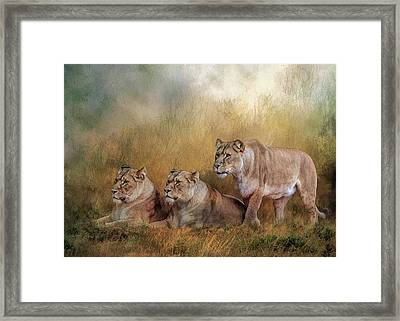 Lionesses Watching The Herd Framed Print