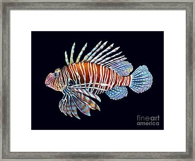 Lionfish In Black Framed Print by Hailey E Herrera