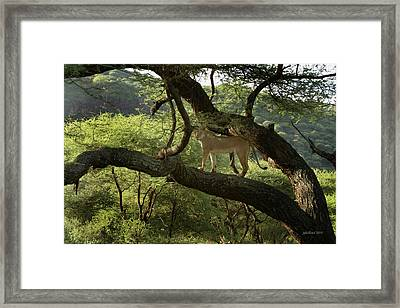 Lions Do Fly Framed Print