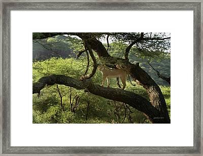 Lions Do Fly Framed Print by Joseph G Holland