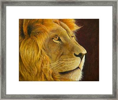 Lion's Gaze Framed Print