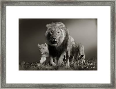 Framed Print featuring the photograph Lions On Their Way by Christine Sponchia