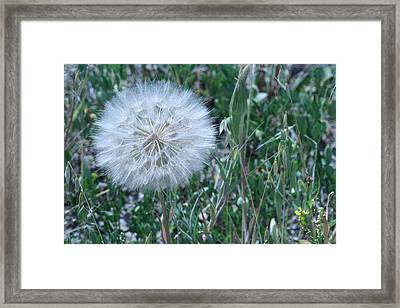 Framed Print featuring the photograph Lion's Tooth by Mary Mikawoz