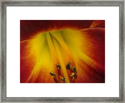 Lip Of The Lily Framed Print by Ward Smith
