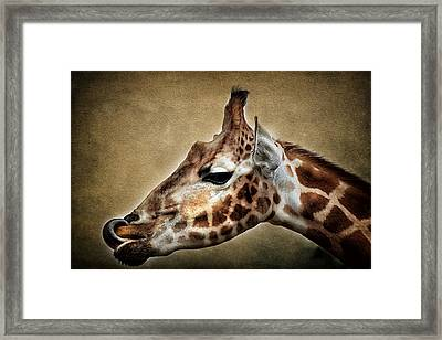 Lip Smacker Framed Print