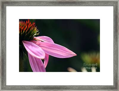 Lips On A Purple Coneflower Framed Print