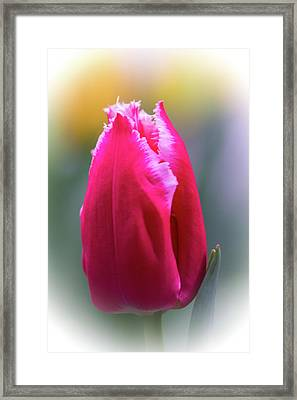 Lipstick Pink Tulip With Fringe Framed Print by Mother Nature