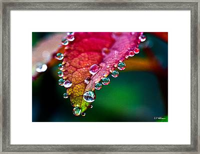 Liquid Beads Framed Print by Christopher Holmes