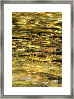 Liquid Gold Framed Print by Adam Jewell