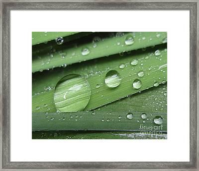Liquid Light On Iris Framed Print