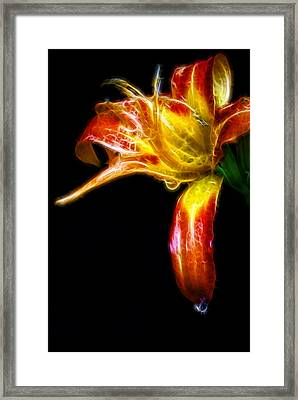 Framed Print featuring the photograph Liquid Lily by Cameron Wood