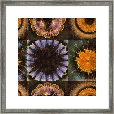 Lirellate Composition Flower  Id 16165-040917-91120 Framed Print