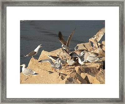 Listen Up Gulls Framed Print by Donald Cameron