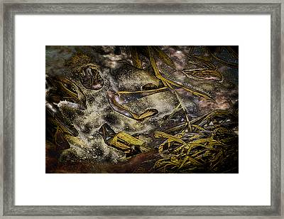 Listening To The Semifrozen Marsh Framed Print