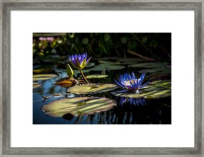 Lit From Within Framed Print
