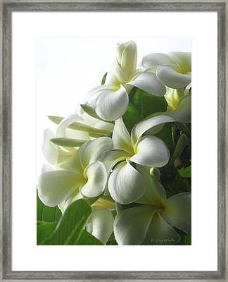 Lit Softly Framed Print