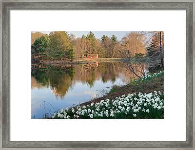 Litchfield Daffodils Cabin Framed Print