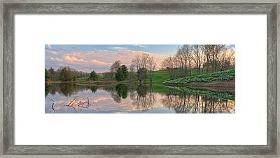 Litchfield Daffodils Panoramic Framed Print