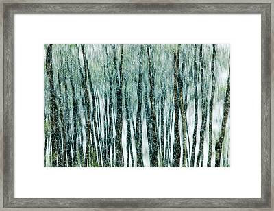 Lithe Framed Print by Todd Klassy