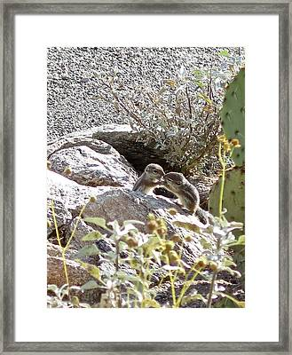 Litter-mates Framed Print by Bonnie See
