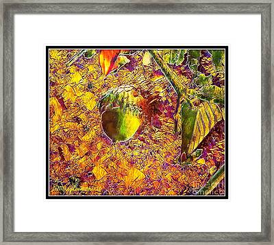 Little Acorn Framed Print by MaryLee Parker
