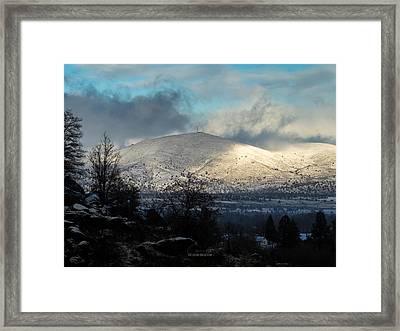 Little Antelope On A Snowy Day Framed Print