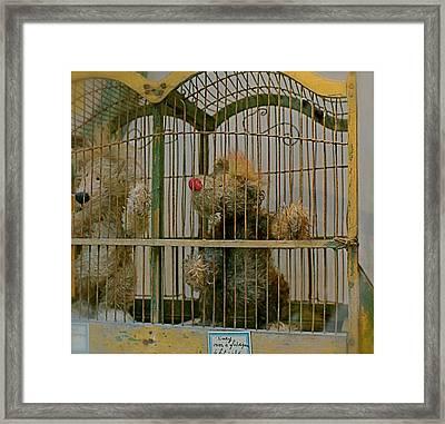Little Bears Framed Print by Louise Fahy