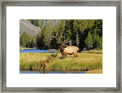 Little Big Man Framed Print