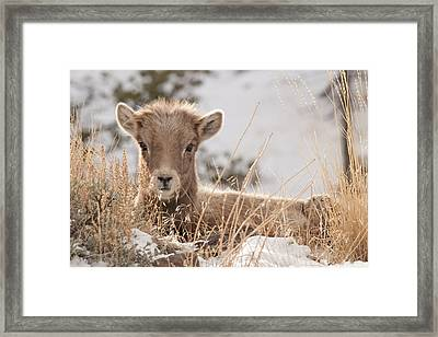 Little Bighorn Framed Print
