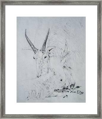 Little Billy Framed Print by Ken Day