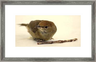 Little Bird 2 Framed Print