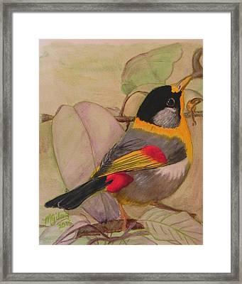 Little Bird Framed Print by MGilroy