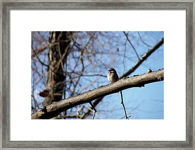 Little Birdie Framed Print by JAMART Photography