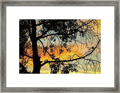 Framed Print featuring the photograph Little Birdie Told Me So by James BO Insogna
