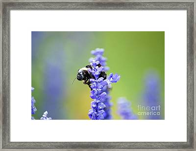 The Harvester Framed Print