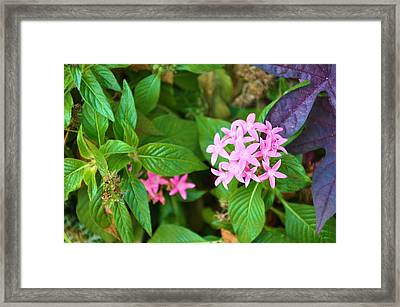Little Bit Of Love Framed Print by Jan Amiss Photography