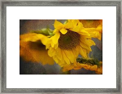 Little Bit Of Sunshine Framed Print by Beverly Stapleton