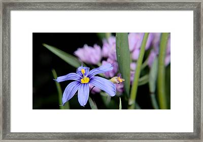 Framed Print featuring the photograph Little Blue Flower by Karen Musick