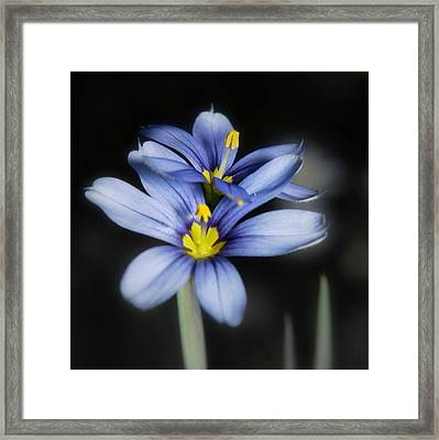 Framed Print featuring the photograph Little Blue Flowers by Karen Musick