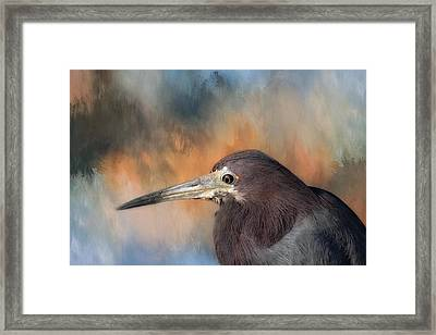 Little Blue Heron Framed Print by Kim Hojnacki