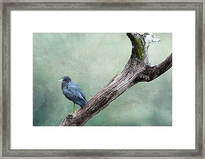 Little Blue Heron On Green Framed Print