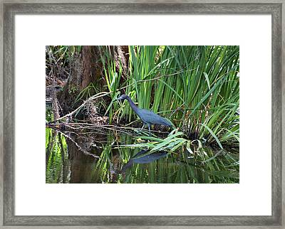 Framed Print featuring the photograph Little Blue Heron by Sandy Keeton