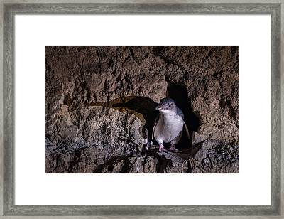 Little Blue Hobbit Hole Framed Print by Ian Riddler