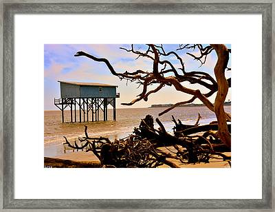 Little Blue Hunting Island State Park Beaufort Sc Framed Print