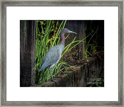 Framed Print featuring the photograph Little Blue Under Bridge by Robert Frederick