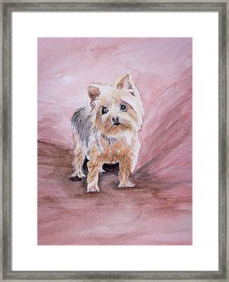 Little Boss Framed Print by Pam Hurst