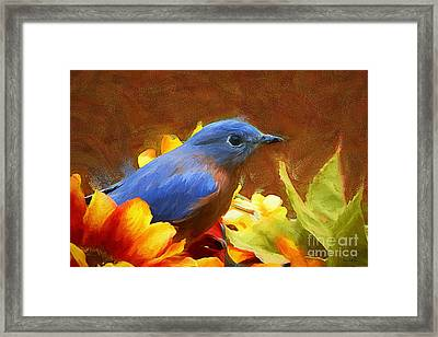 Little Boy Blue Framed Print by Tina  LeCour