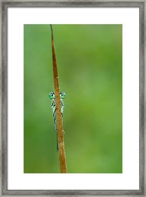 Little Brave Warrior Framed Print by Roeselien Raimond