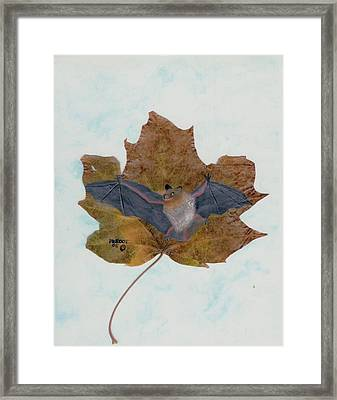 Little Brown Bat Framed Print