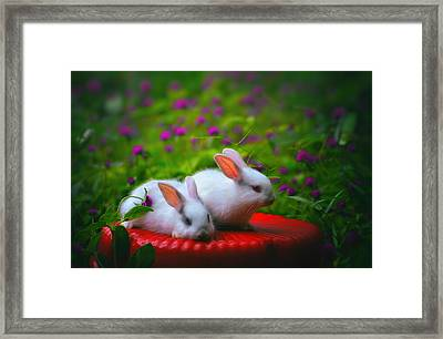 Little Bunnies Framed Print by Nishith Ram